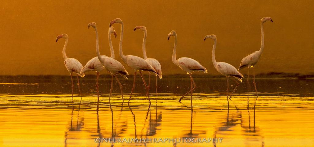 Flamingo-06
