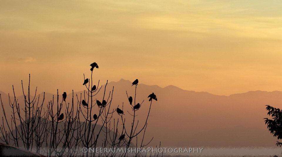 Landscapes-01