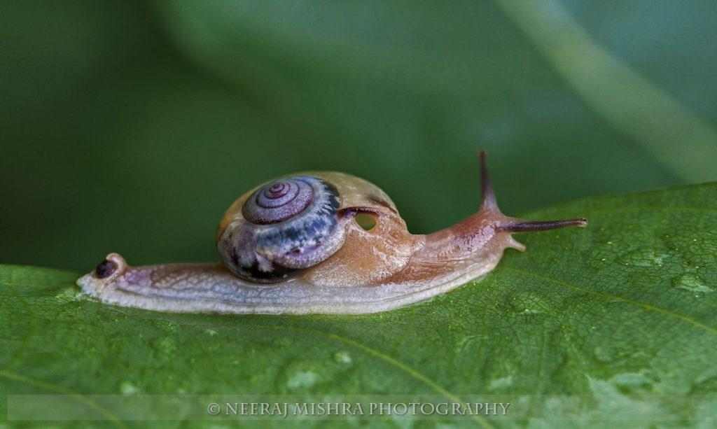 Snail-01 (2)