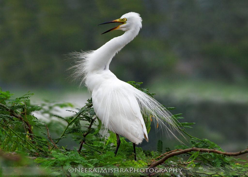 Egret-10