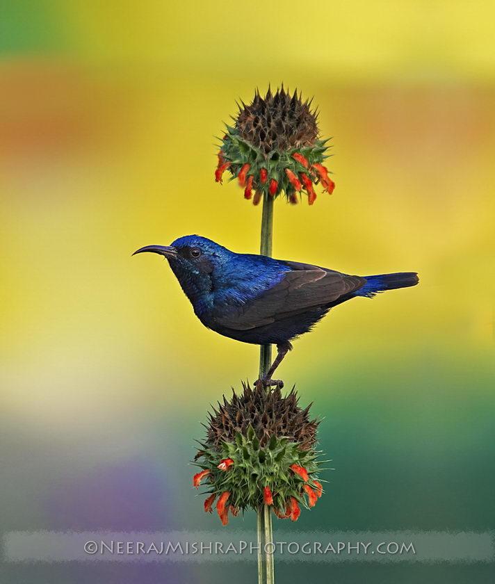 Sunbirds-02