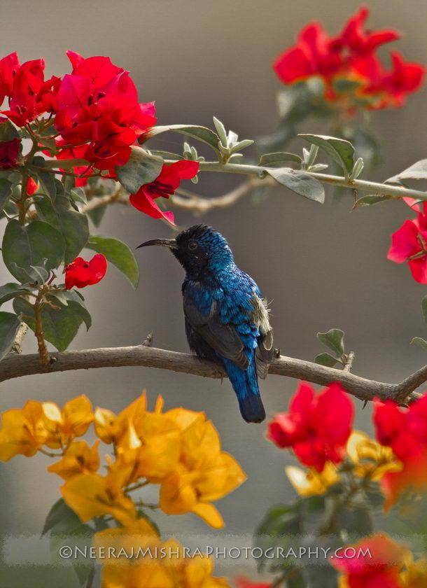 Sunbirds-08