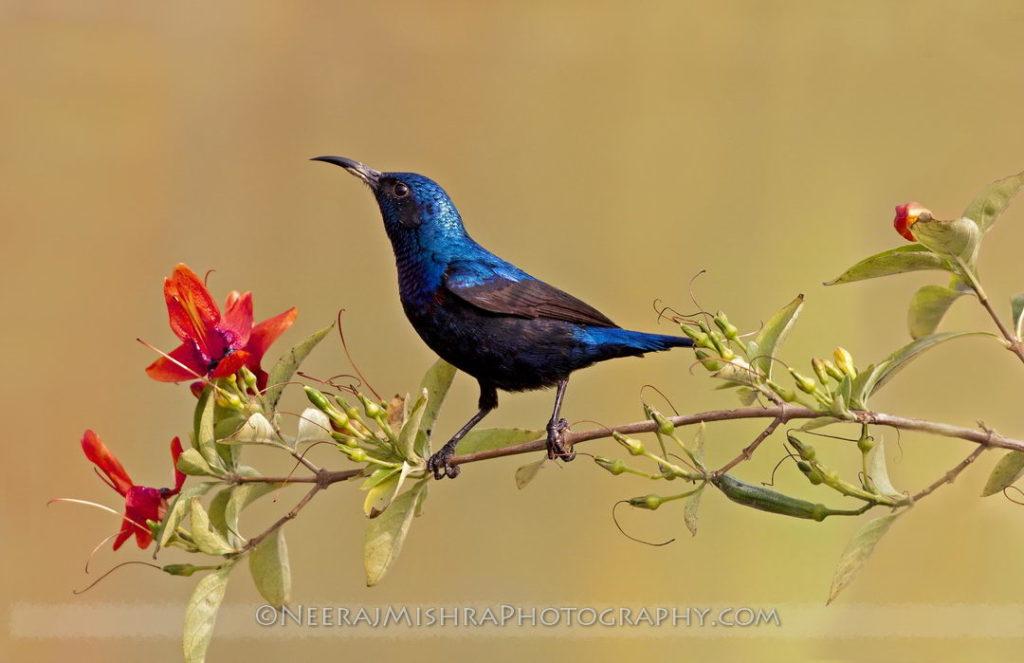 Sunbirds-09