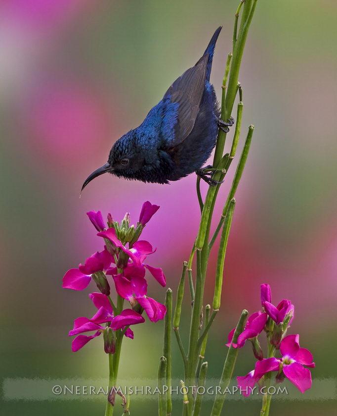 Sunbirds-12