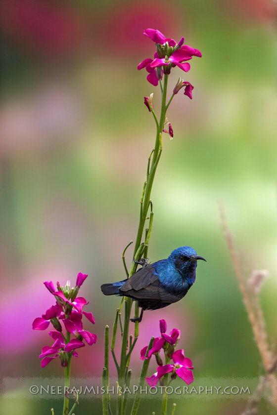 Sunbirds-14