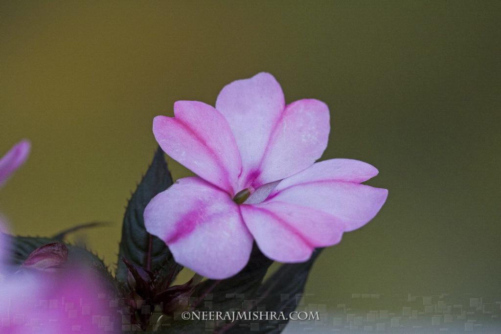 Flowers-14